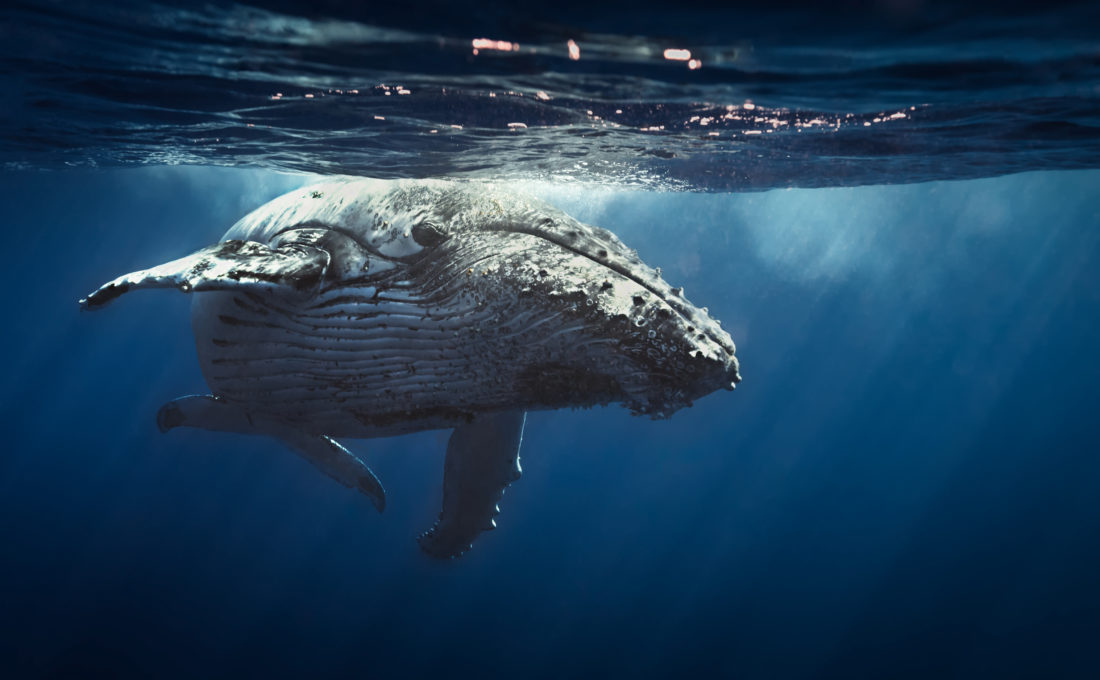 Bitcoin Whales Awaken: What Does This Mean for BTC Price?