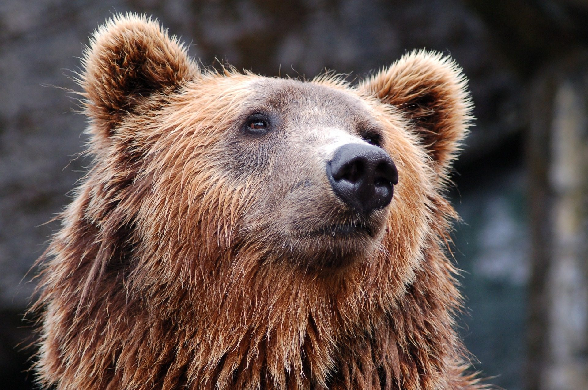 Bitcoin Price Still Heading for a Tumble as Bears Hold Dominance