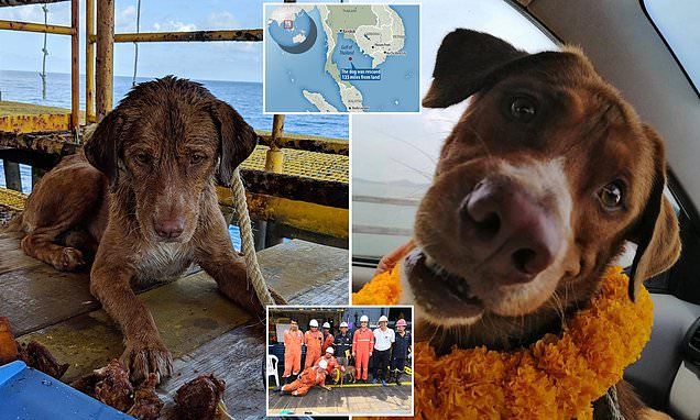 Dog rescued after it's found swimming 135 MILES out at sea